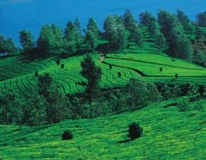 Coorg_Tourism